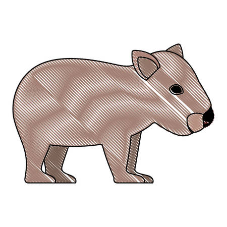 wild wombat australian creature vector illustration design