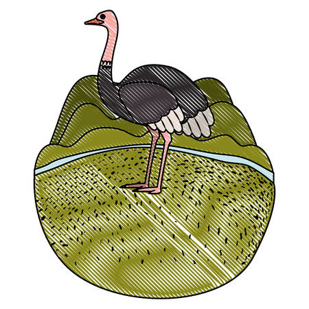 A wild ostrich Australian bird in the camp vector illustration design