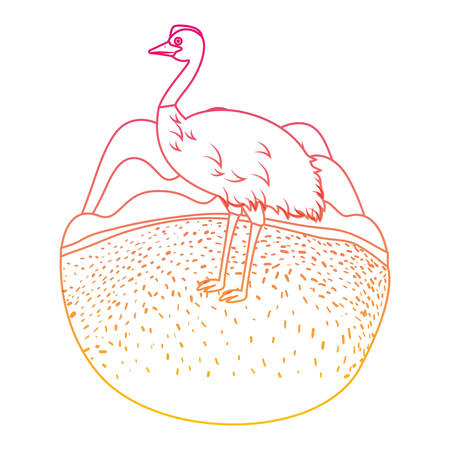 Wild emu australian bird in the camp vector illustration design. Ilustração