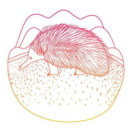 wild echidna australian creature in the camp vector illustration design