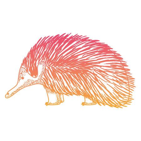 wild echidna australian creature vector illustration design Illustration
