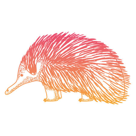 wild echidna australian creature vector illustration design 向量圖像