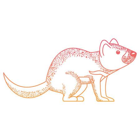 wild tasmanian devil creature vector illustration design