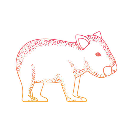 wild wombat australian creature vector illustration design