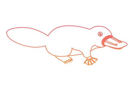 platypus wild animal australian vector illustration design