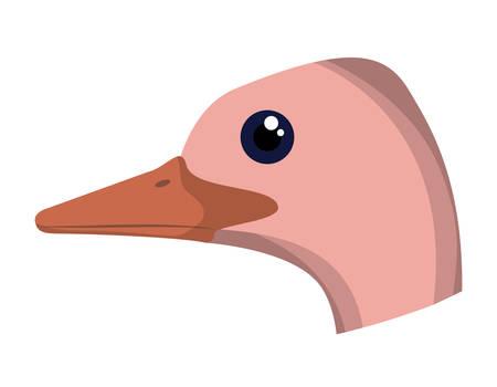 wild ostrich australian bird head vector illustration design Illustration