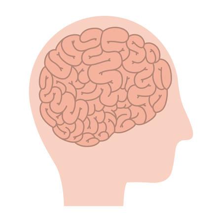 head profile human with brain vector illustration design Illustration