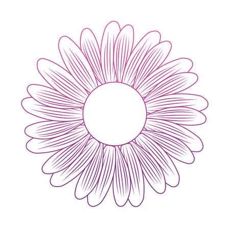 cute daisy flower decorative icon vector illustration design