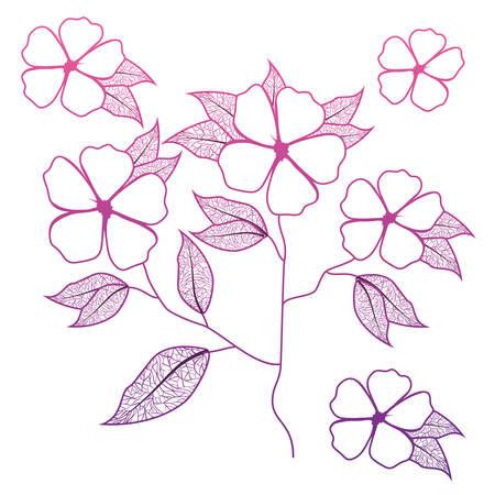 cute daisy flower with leafs decorative vector illustration design Çizim