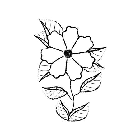 cute daisy flower with leafs decorative vector illustration design Illustration