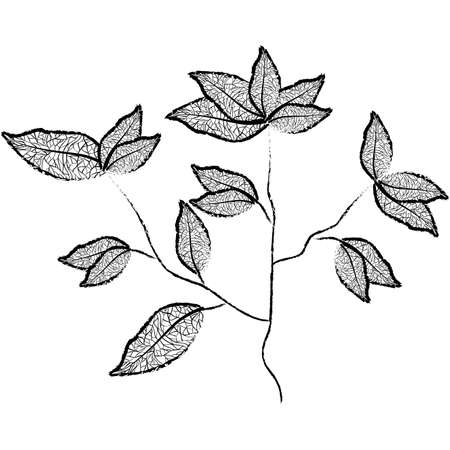 plant branch with leaves vector illustration design