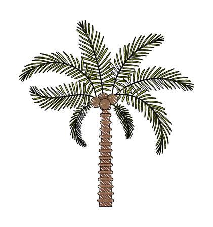 tree palm natural icon vector illustration design