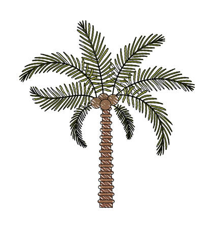 tree palm natural icon vector illustration design