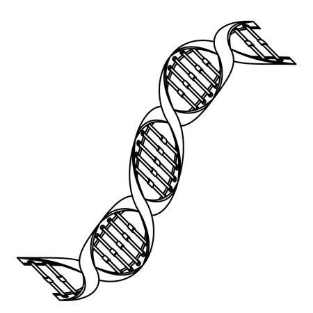 diagonal dna chain science monochrome vector illustration design