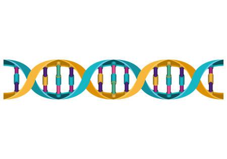 horizontal dna chain science colorful icon vector illustration design Vectores