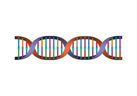 horizontal dna chain science colorful icon vector illustration design Illustration