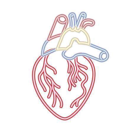 heart with veins isolated icon vector illustration desing