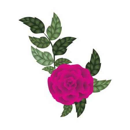 Hermosa rosa con hojas icono aislado diseño de ilustración vectorial