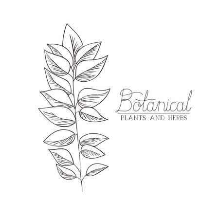 botanical illustration label with plant vector illustration desing