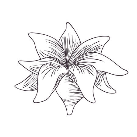 flowers and leafs isolated icon vector illustration desing