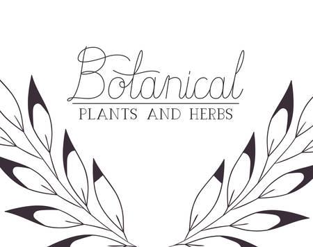 botanical plants and herbs label vector illustration desing  イラスト・ベクター素材