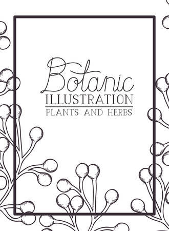 botanic illustration label with plants and herbs vector illustration desing