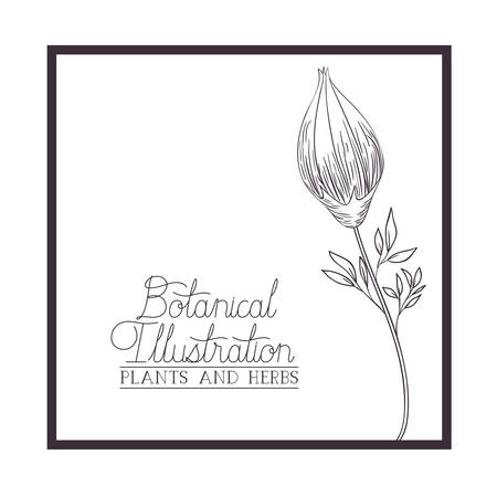 botanical illustration label with plants and herbs vector illustration desing