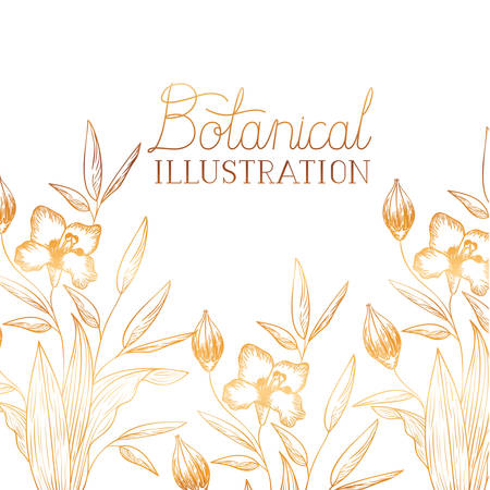 botanical illustration label with plants vector illustration desing Ilustração