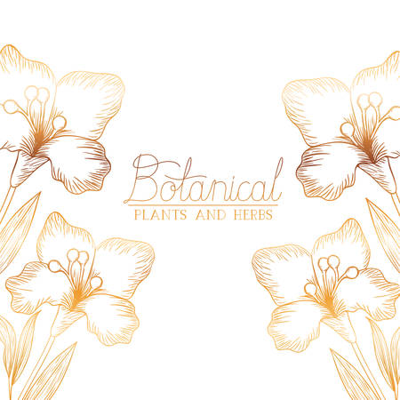 botanical label with plants and herbs vector illustration desing