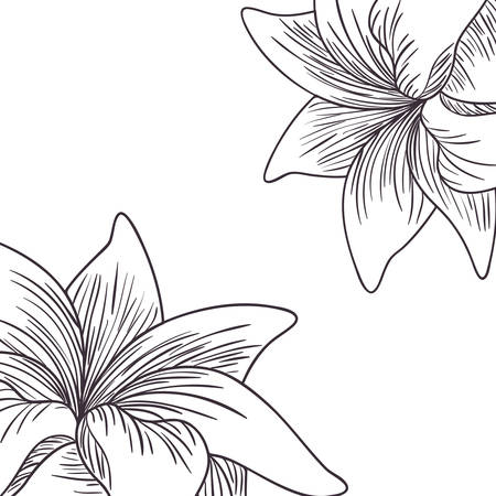 Muster Pflanzen und Kräuter isoliert Symbol Vektor Illustration Design