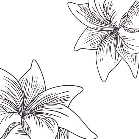 Plantes et herbes modèle isolé icône illustration vectorielle desing