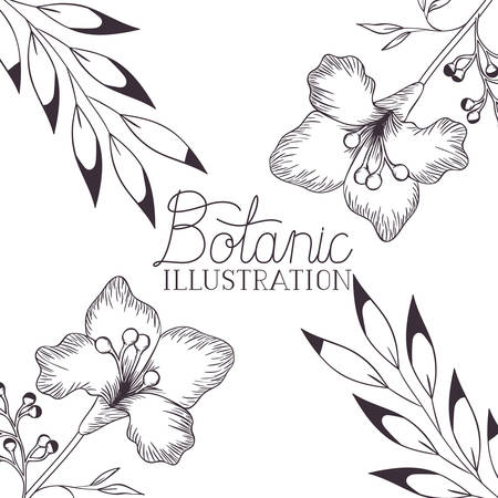 botanic illustration label with plants vector illustration desing