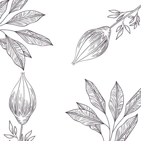 pattern plants and herbs isolated icon vector illustration