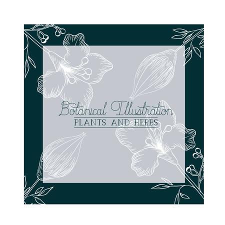 botanical illustration label with plants and herbs vector illustration design
