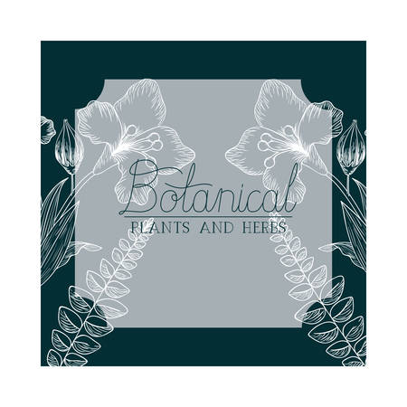 botanical label with plants and herbs vector illustration