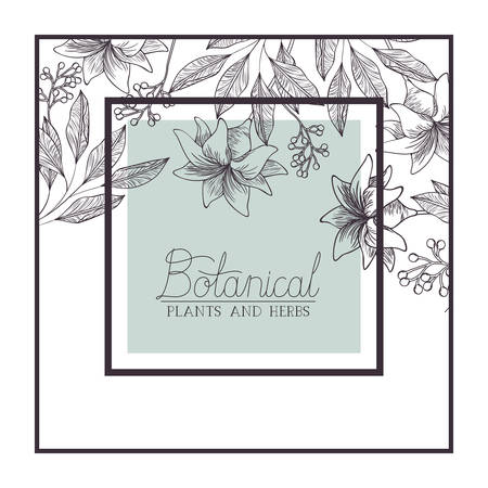 botanical plants and herbs label vector illustration