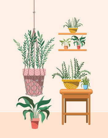 houseplants in macrame hanger and shelfs vector illustration design