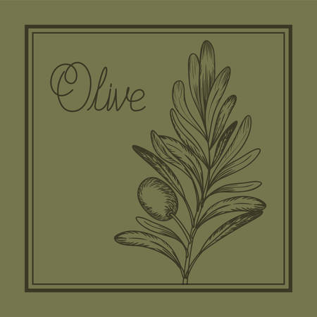 olive plant drawn italian food vector illustration design