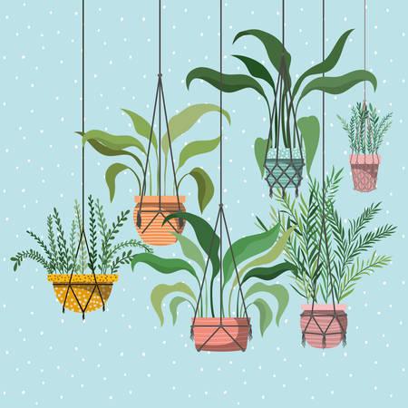 houseplants in macrame hangers vector illustration design Illustration