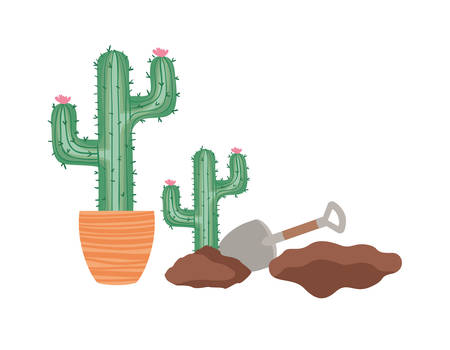 cactus to plant isolated icon vector illustration design