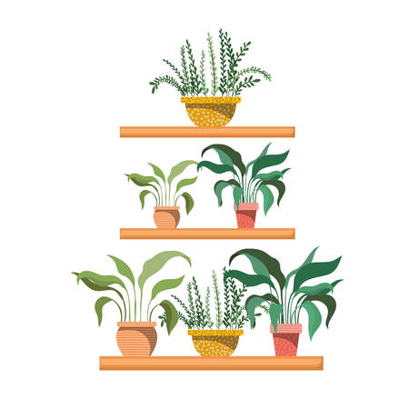 houseplants with potted on shelf isolated icon vector illustration design Standard-Bild - 122850467