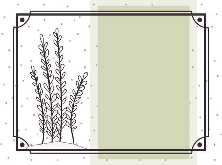 pattern plant with frame isolated icon vector illustration design