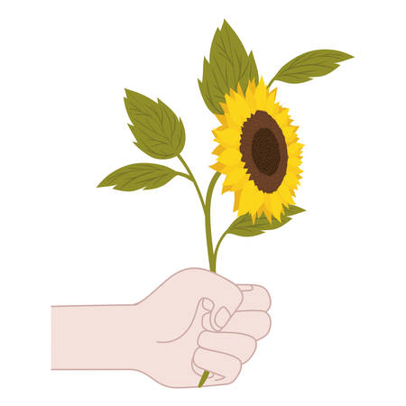 hand with sunflower isolated icon vector illustration design