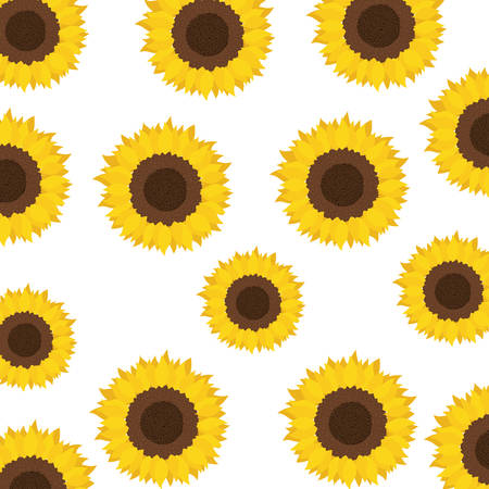 pattern of sunflowers isolated icon vector illustration design