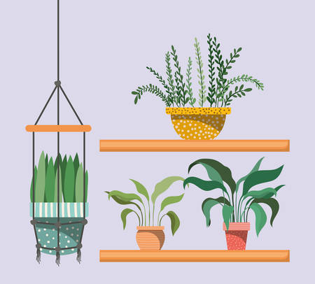 houseplants in macrame hangers and shelfs vector illustration design