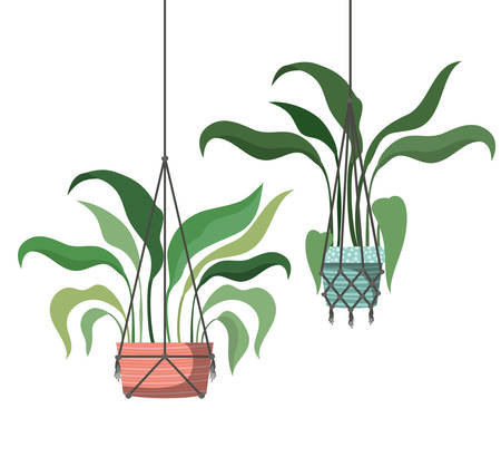 houseplants on macrame hangers icon vector illustration design Illustration