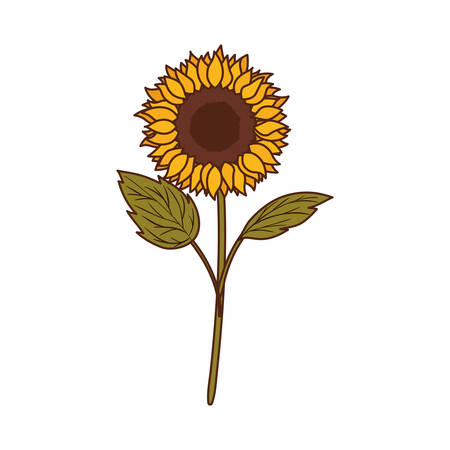 beautiful sunflower isolated icon vector illustration design