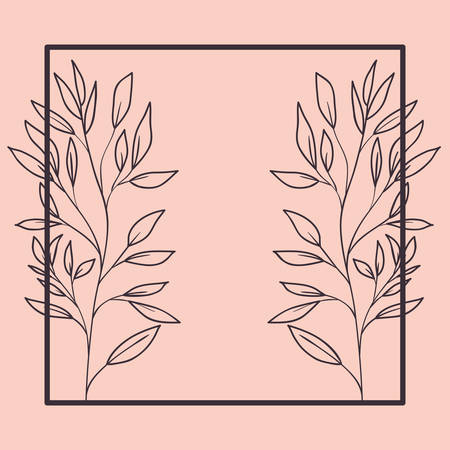 botanical plants and herbs square frame vector illustration design Illustration
