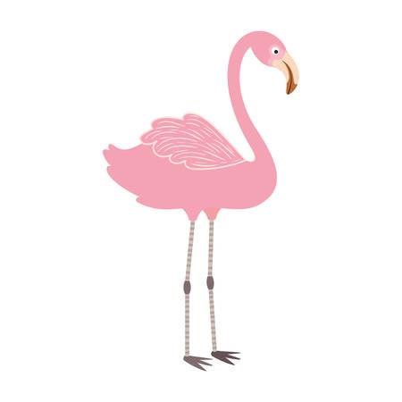 pink flemish in white background vector illustration design Illusztráció