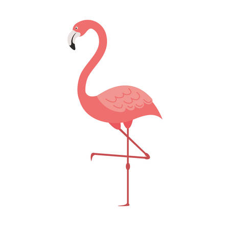 pink flamingo isolated icon vector illustration design Illustration